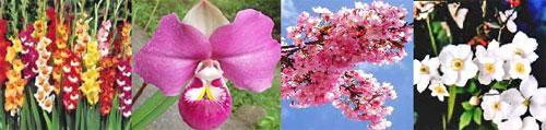 Bunga mahal