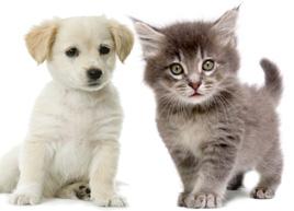 Top 100 Nama Kucing Dan Anjing Versi Vpi Namafb Com