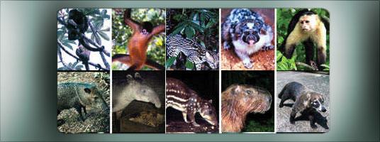 Hewan dan nama latin
